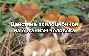 Псилоцибиновые грибы и их воздействие на организм